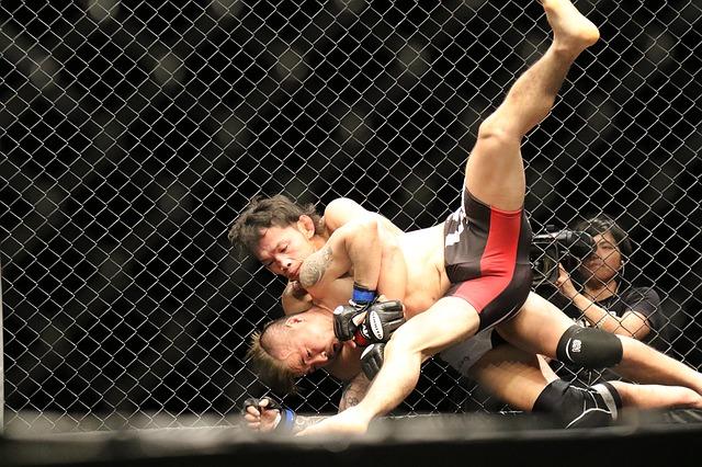 zápasníci v boxu