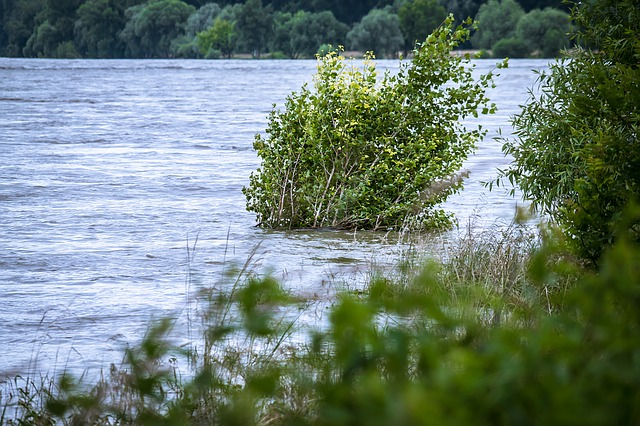 stromy v záplavách
