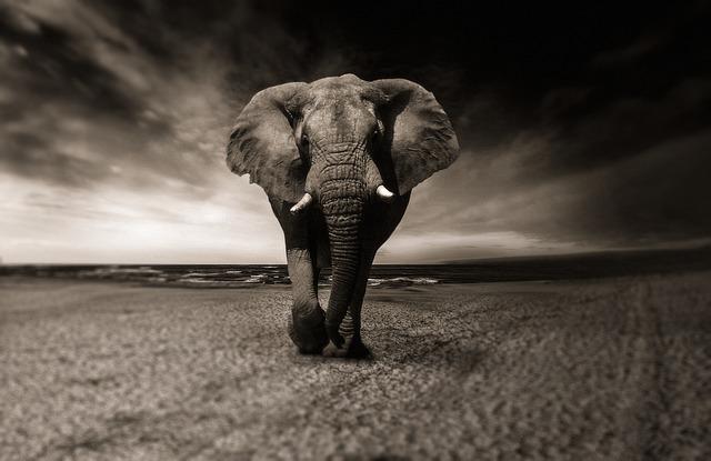 slon v Africe.jpg