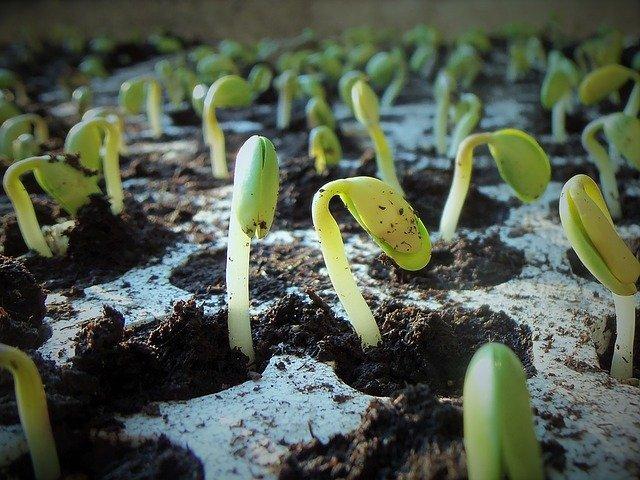 Začněte klíčit ze semínek