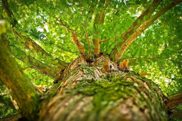 pohled na strom