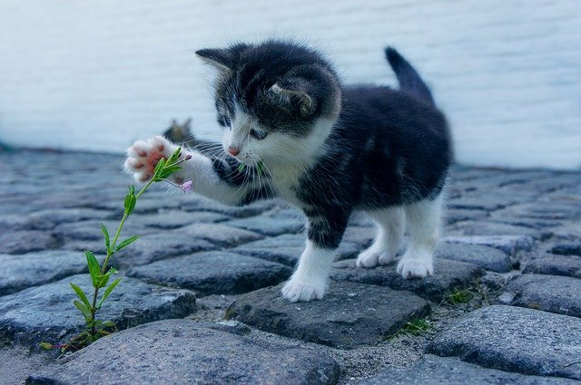 kotě u rostlinky